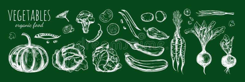 Coleção vegetal Ilustração tirada mão 1 do esboço do vetor ilustração do vetor