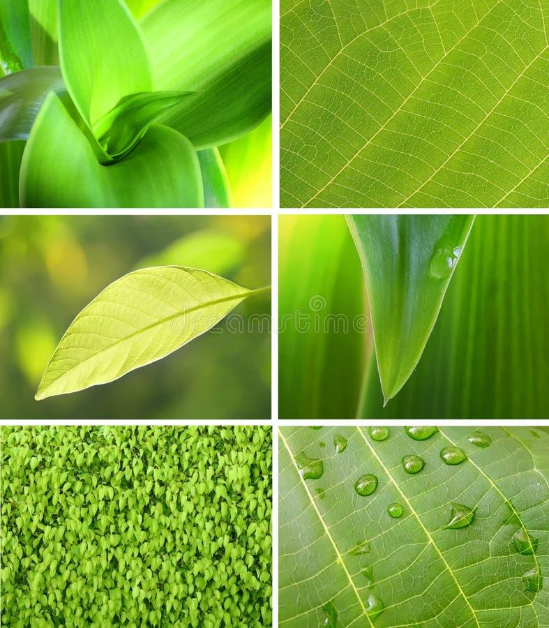 Coleção verde da folha fotografia de stock royalty free