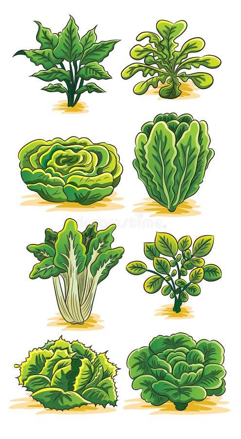 Coleção verde dos vegetais ilustração do vetor