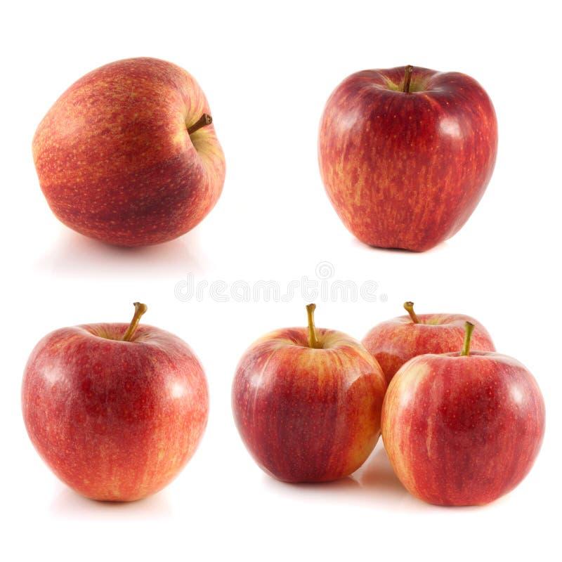 Coleção vermelha da maçã no fundo branco foto de stock