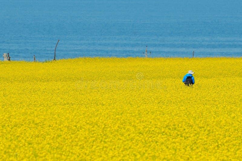 Cole цветет моря Стоковое Изображение RF