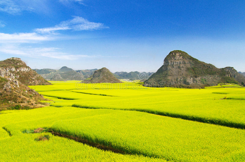 Download Cole fields stock image. Image of countryside, yunnan - 13498783