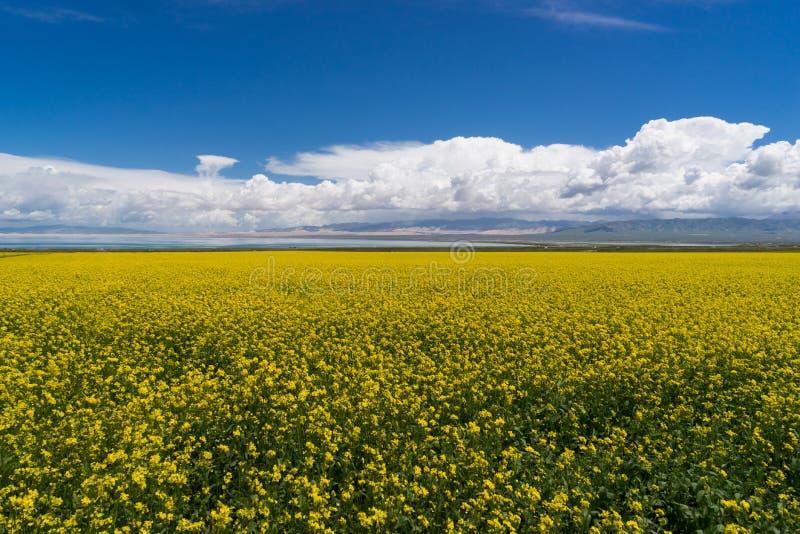 Cole Flower Landscape imagen de archivo