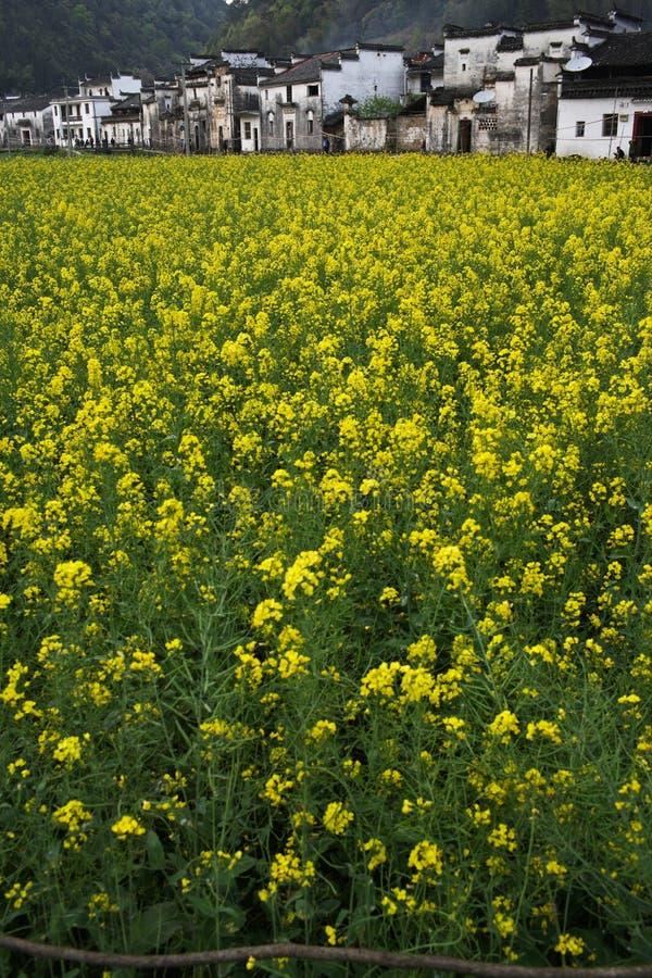 cole kwiat zdjęcie royalty free
