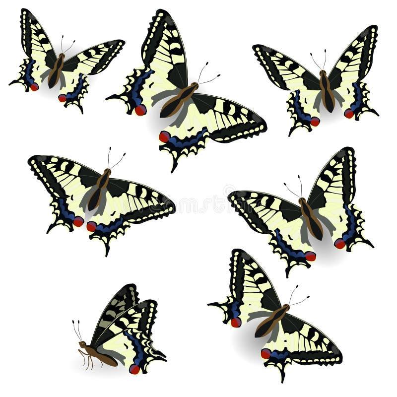 Cole??o da borboleta Swallowtail real?stico Ilustra??o do vetor do isolado no fundo puro Pode ser usado como o elemento do projet ilustração do vetor