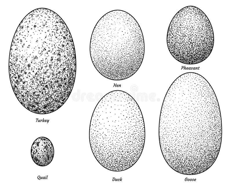 Cole??o da ilustra??o dos ovos do p?ssaro, desenho, gravura, tinta, linha arte, vetor ilustração stock