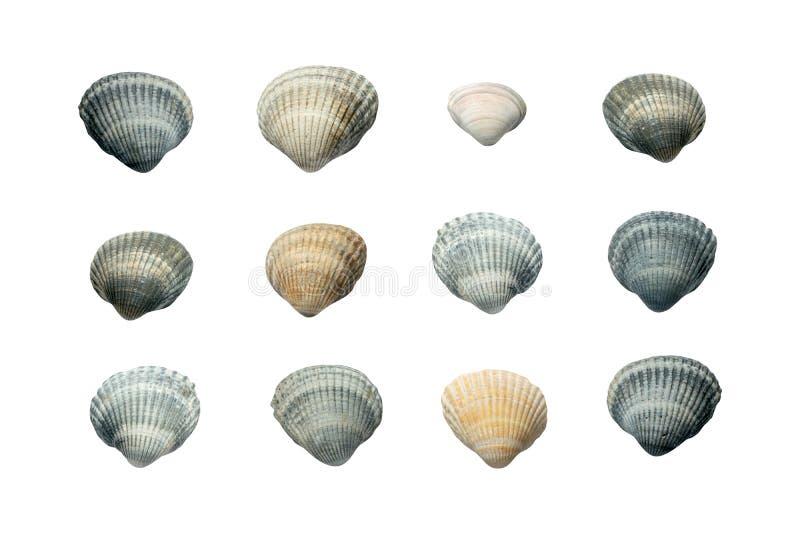 Cole??o das conchas do mar isoladas no fundo branco fotos de stock royalty free