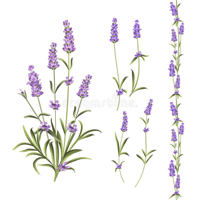 Cole??o das flores de Provence O grupo de alfazema floresce elementos Jogo violeta das flores Pacote da c?pia do ver?o da forma e ilustração do vetor