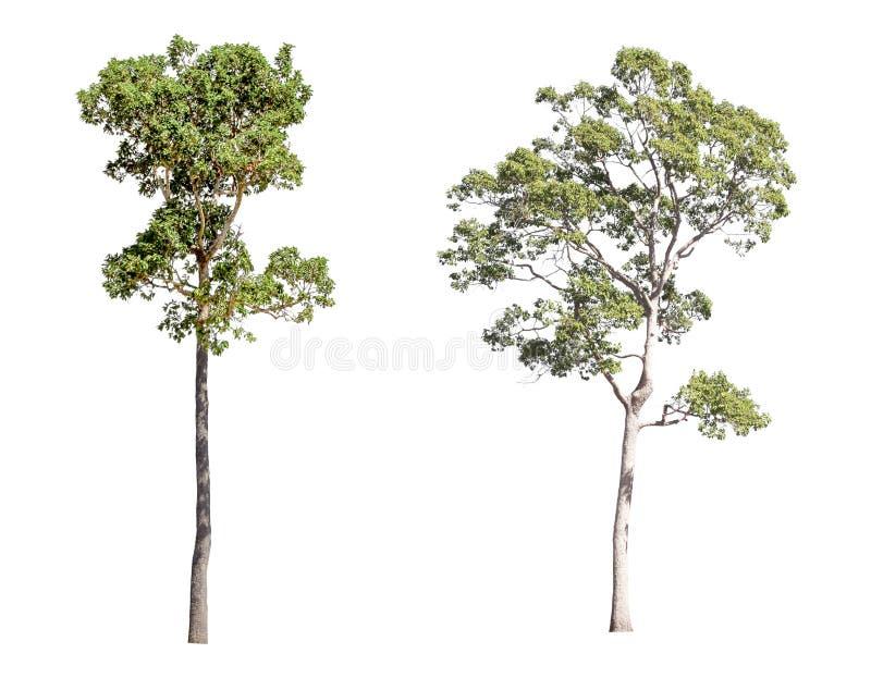 Cole??o de ?rvores isoladas em um fundo branco ?rvore bonita ? apropriado para o uso na decora??o, na decora??o, e em imprimir imagem de stock
