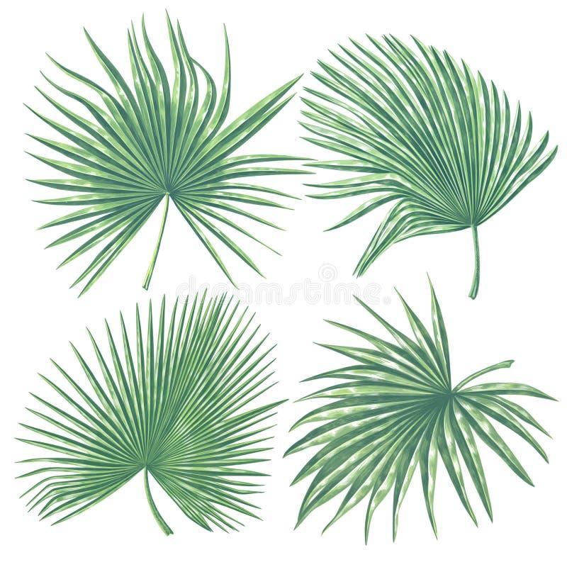 Cole??o tropical das folhas Ajuste das folhas de palmeira no estilo realístico com detalhes altos ilustração do vetor