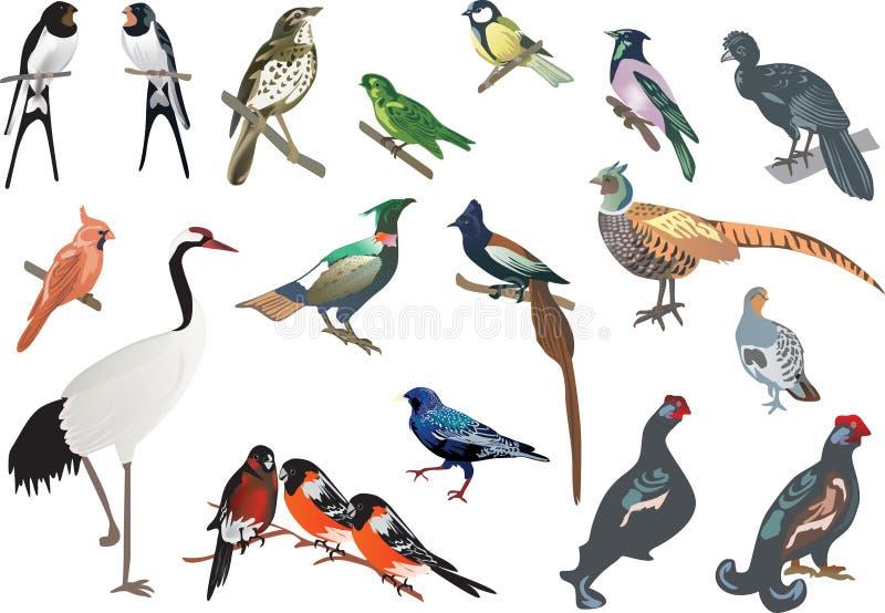 Colección aislada de los pájaros del color ilustración del vector