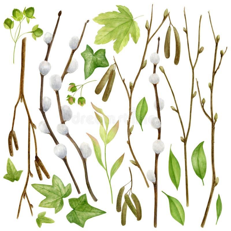 Colección botánica de la acuarela Hierbas, flores salvajes y hojas Conjunto de la naturaleza stock de ilustración