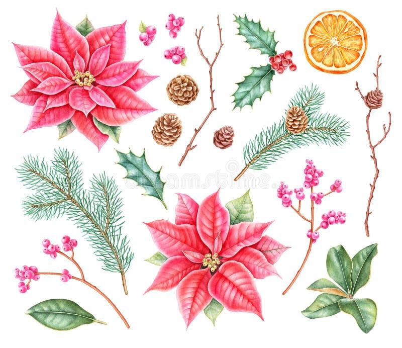 Colección botánica de la Navidad del Watercolour libre illustration