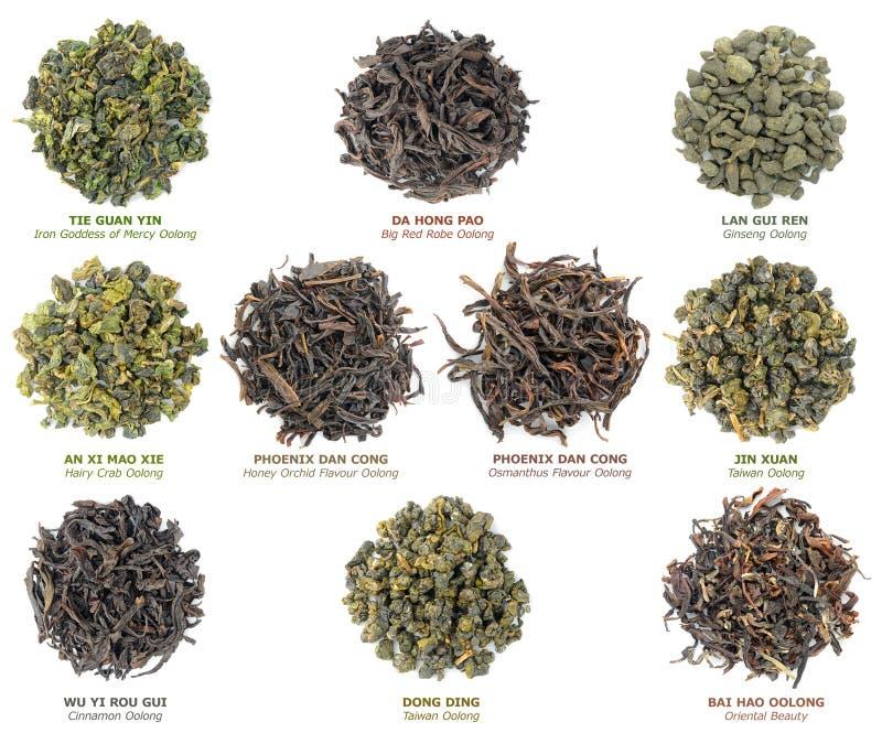 Colección china del té del oolong foto de archivo libre de regalías