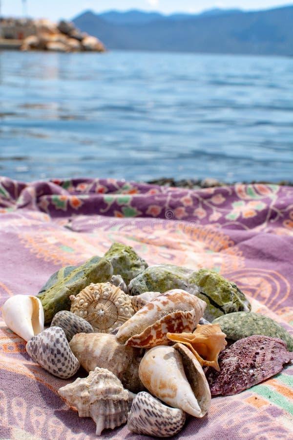 Colección colorida de diversas cáscaras del mar recogidas en la pequeña playa en Peloponeso, Grecia imagen de archivo libre de regalías