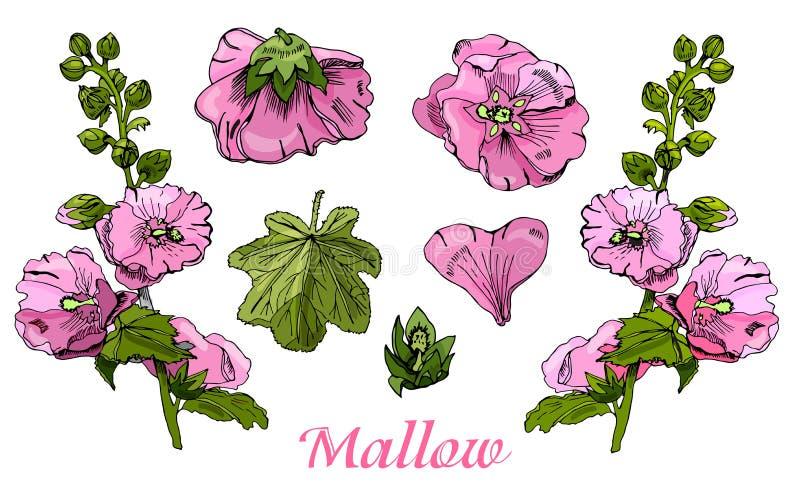 Colección con el ramo y las solas flores de la malva rosada y de hojas verdes stock de ilustración