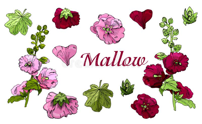 Colección con el ramo y solas flores de las flores marrón y rosadas de la malva y de las hojas verdes ilustración del vector