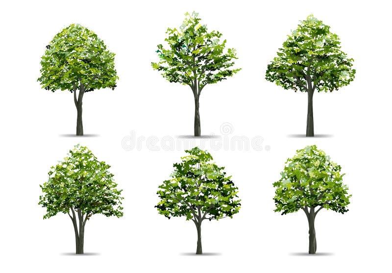 Colección de árbol realista aislada en el fondo blanco Objeto natural para el diseño del paisaje, el parque y el gráfico al aire  ilustración del vector