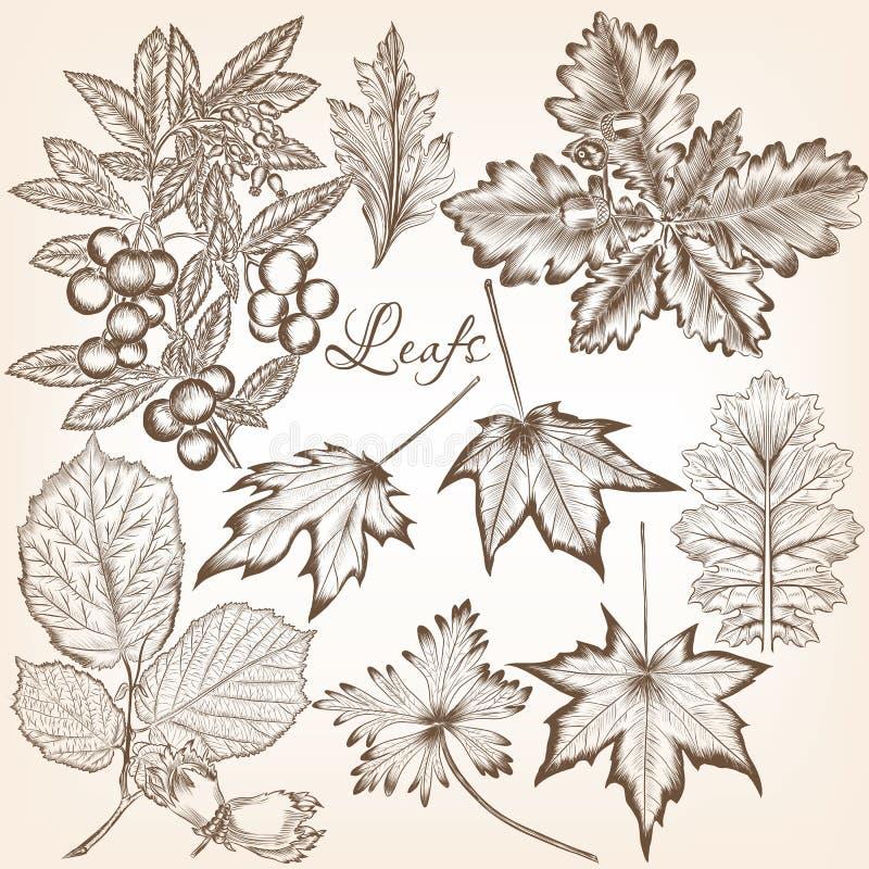 Colección de altas hojas detalladas del vector para el diseño floral libre illustration