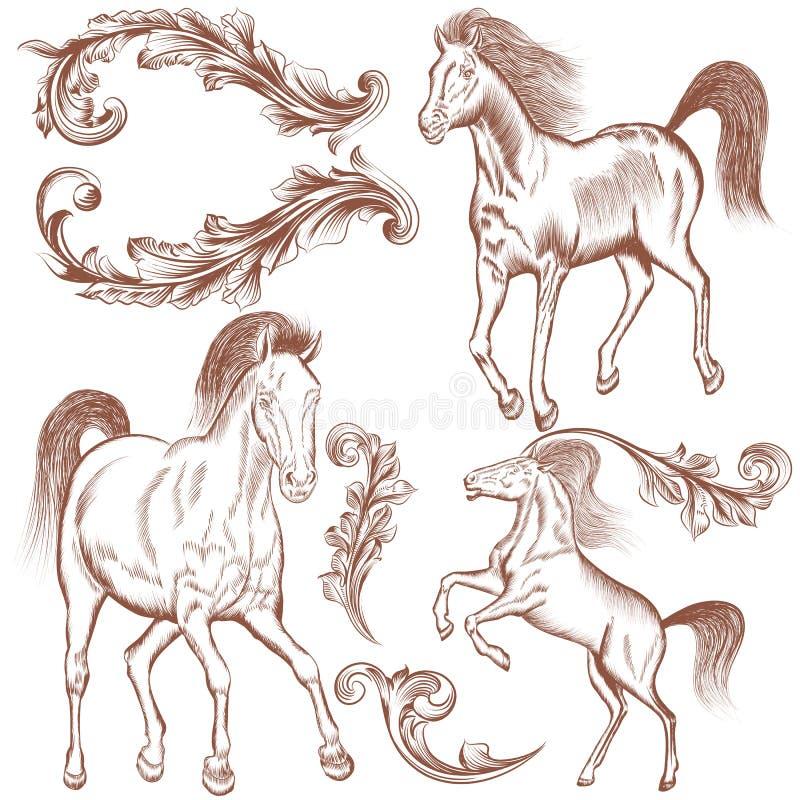 Colección de caballos dibujados mano y de flourishes del vector para el diseño libre illustration