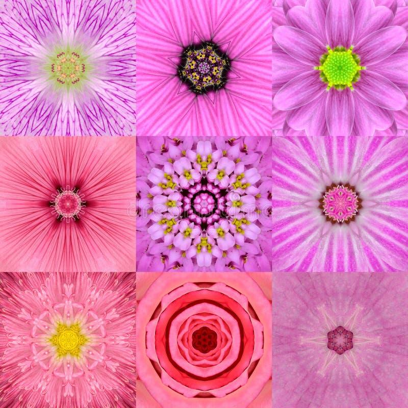 Colección de caleidoscopio concéntrico rosado de nueve mandalas de la flor imagenes de archivo