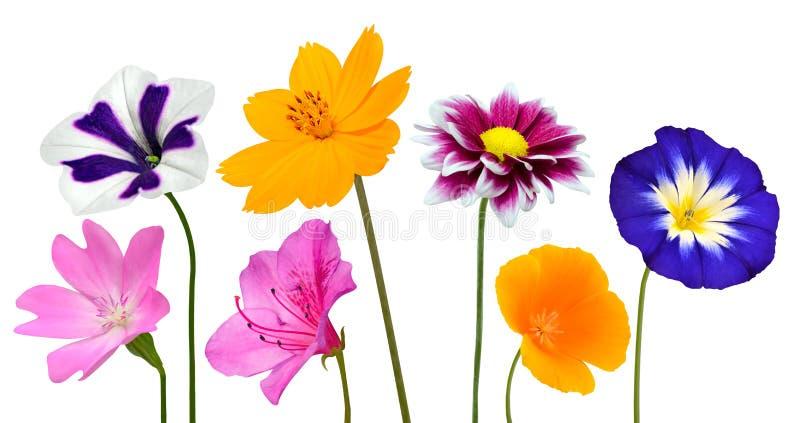 Colección de diversas flores coloridas aisladas en blanco imagenes de archivo