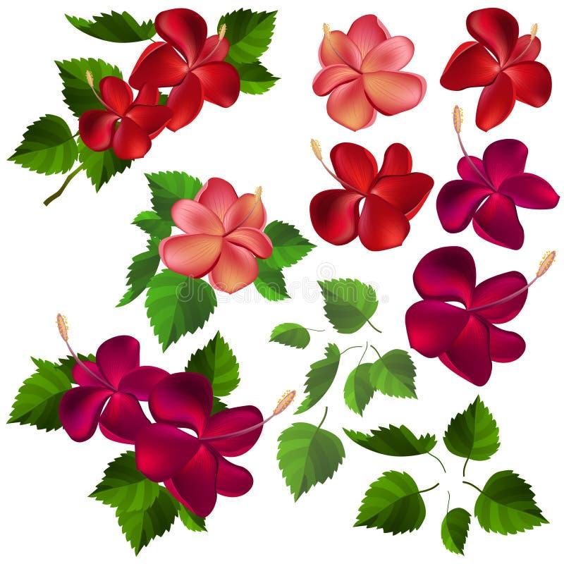 Colección de diversas flores y hojas libre illustration