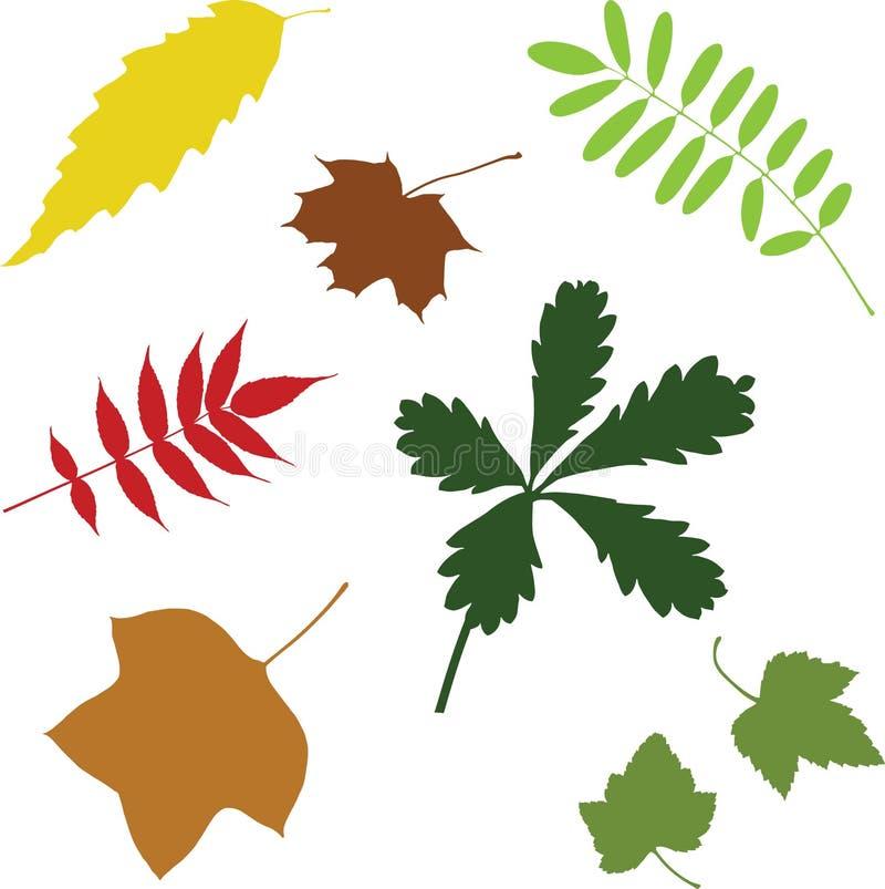 Colección de diversas hojas del vector foto de archivo