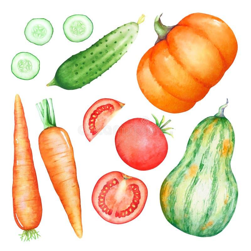 Colección de ejemplos dibujados mano de la acuarela de verduras stock de ilustración