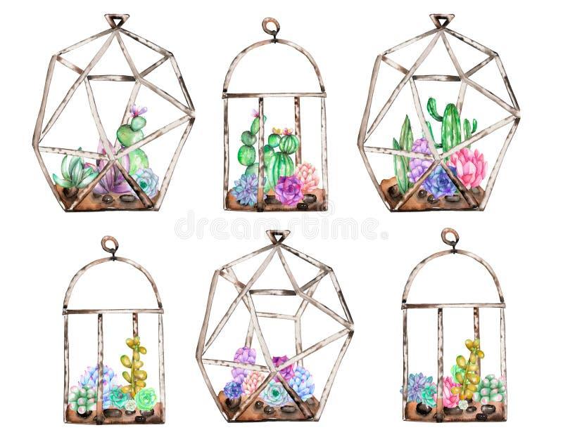 Colección de florariums con los succulents y los cuctuses de la acuarela dentro stock de ilustración