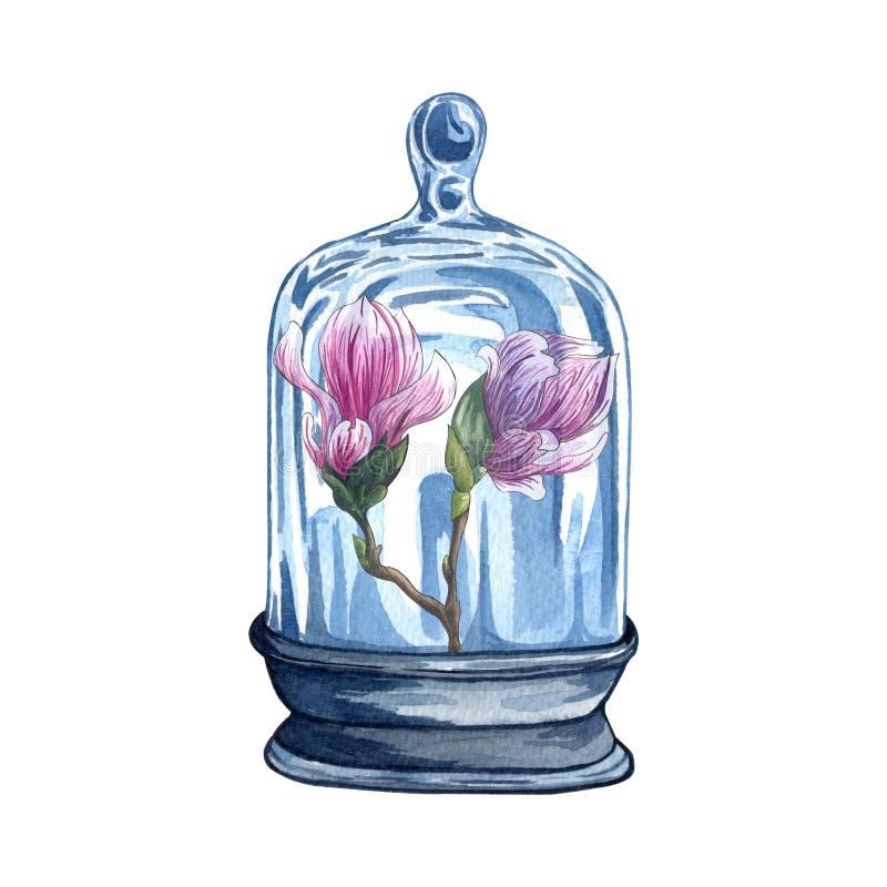 Colección de florariums, tarro de la acuarela con la flor rosada de la magnolia ilustración del vector