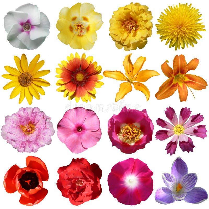 Colección de flores fotografía de archivo