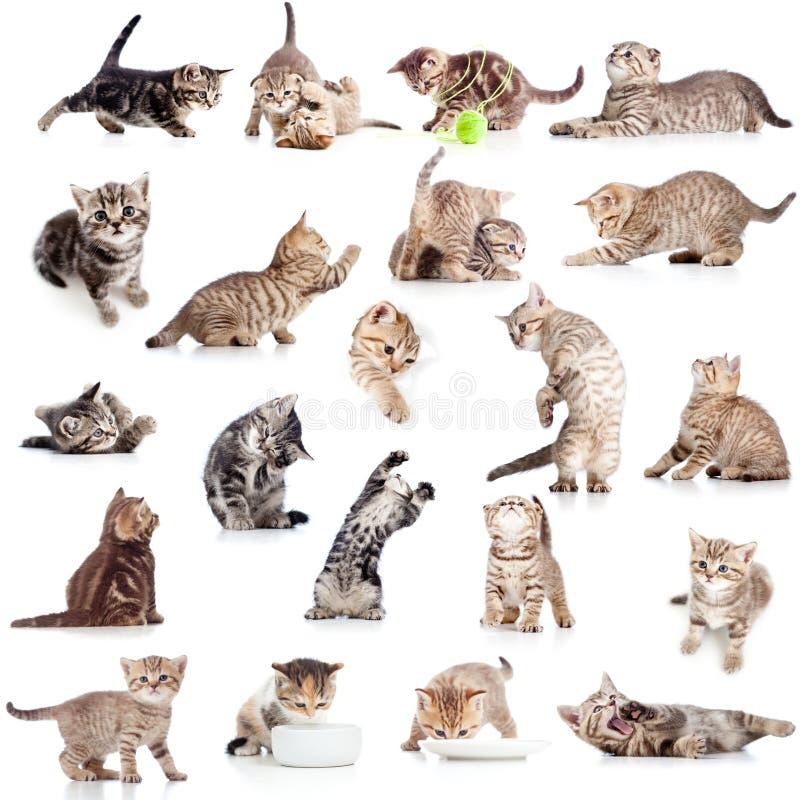 Colección de gato juguetón divertido en blanco fotos de archivo libres de regalías