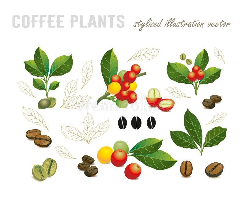Colección de granos de café en una rama del cafeto ilustración del vector