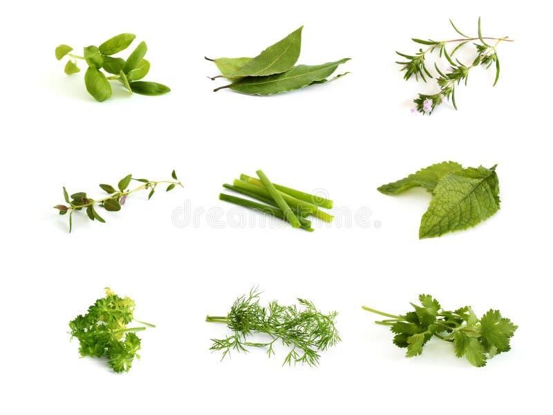 Colección de hierbas aromáticas imagenes de archivo