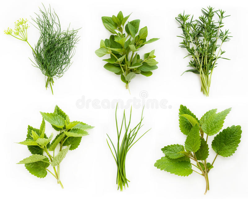 Colección de hierbas frescas foto de archivo
