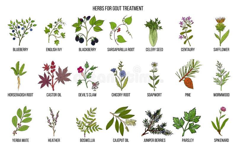 Colección de hierbas naturales para el tratamiento de la gota libre illustration