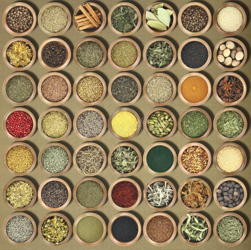 Colección de hierbas y de especias imagen de archivo