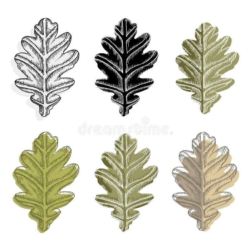 Colección de hojas del roble del vector aisladas en el fondo blanco ilustración del vector