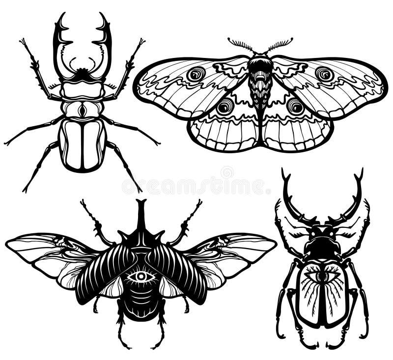 Colección de imágenes de insectos: insectos y polilla libre illustration