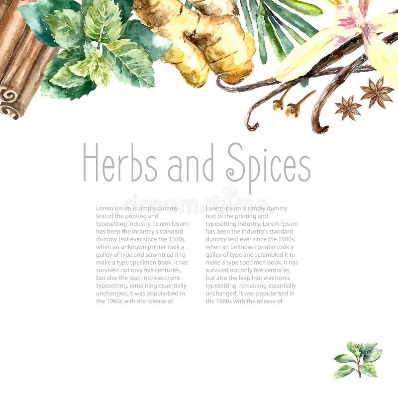 Colección de la acuarela de hierbas frescas y de especias aisladas libre illustration