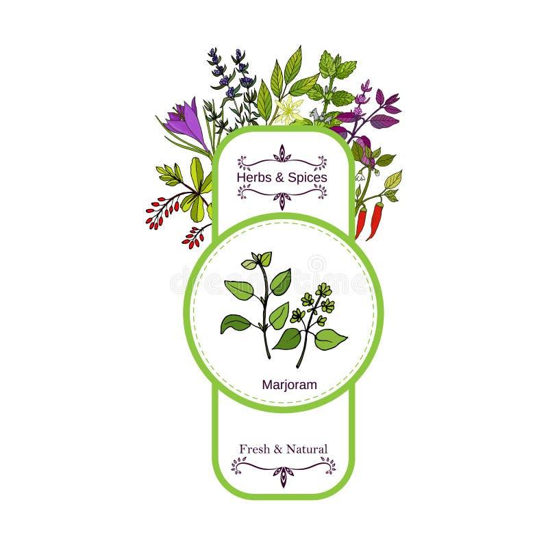 Colección de la etiqueta de las hierbas y de las especias del vintage mejorana stock de ilustración