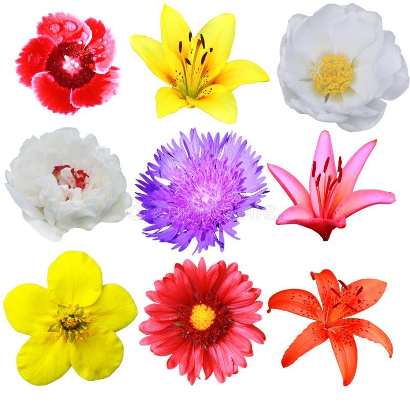 Colección de la flor fotografía de archivo libre de regalías