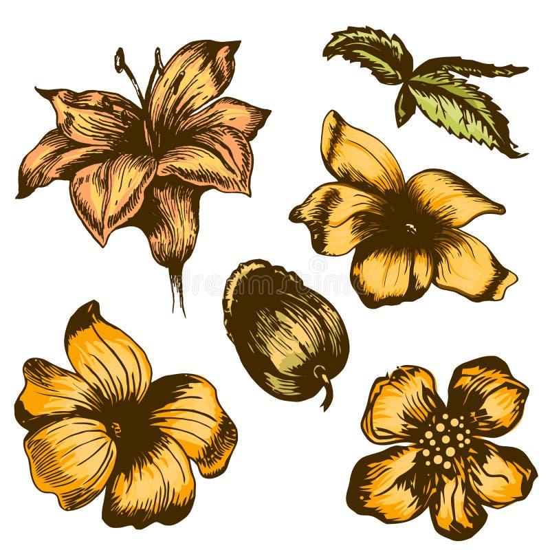 Colección de la flor de Grunge ilustración del vector