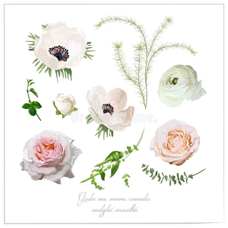 Colección de la flor de los elementos del vector de rosa blanca rosada del jardín y stock de ilustración