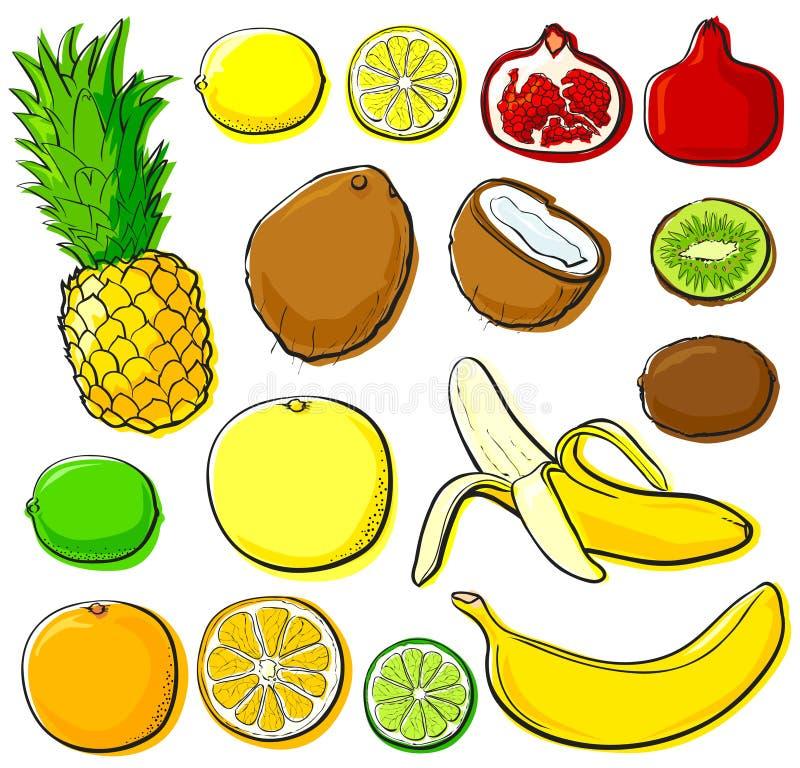 Colección de la fruta tropical stock de ilustración