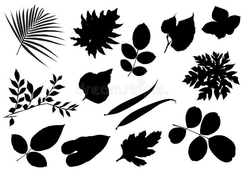 Colección de la hoja libre illustration