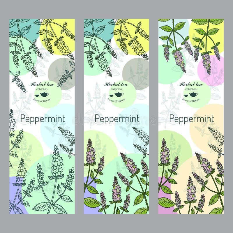 Colección de la infusión de hierbas Sistema de la bandera de la hierbabuena libre illustration