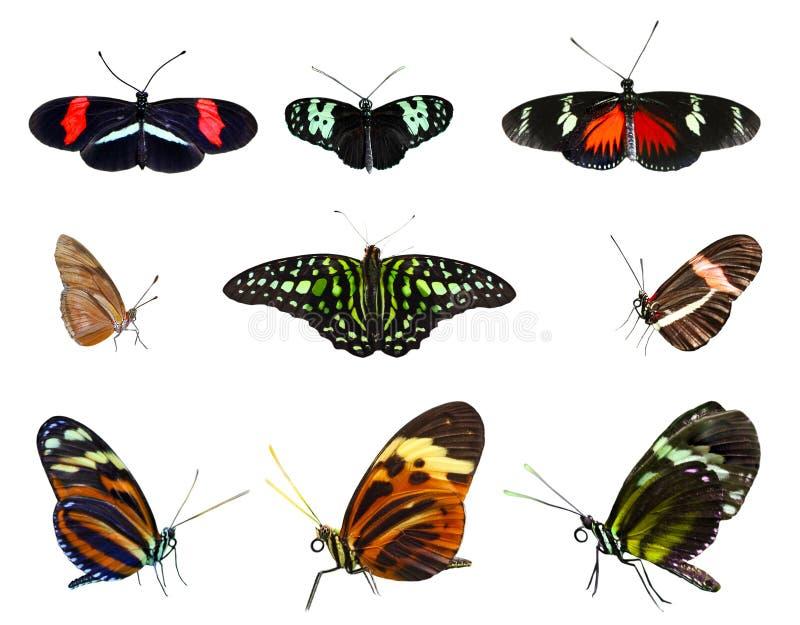 Colección de la mariposa fotos de archivo libres de regalías