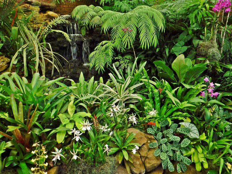 Colección de la orquídea fotografía de archivo libre de regalías